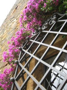 Image of bougainvillea-covered window grille