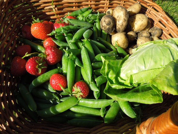 Image of strawberries, peas and new potatoes in a basket