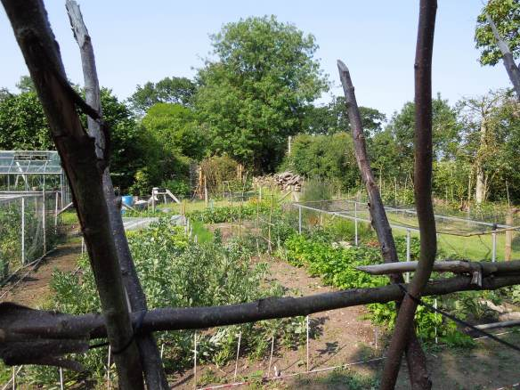 Image of the vegetable garden