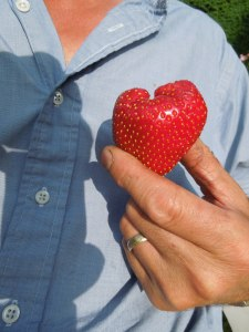 Image of a heart-shaped strawberry held against a man's chest