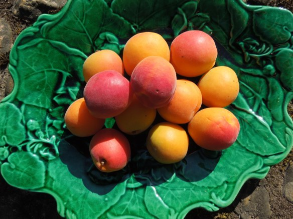 Image of apricots on a green plate