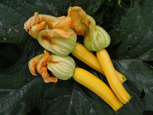 Image of courgettes and their flowers