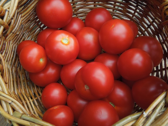 Image of a basket of tomatoes