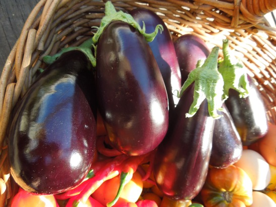 Image of aubergines in a basket