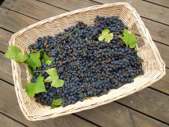 Image of laundry basket full of grapes