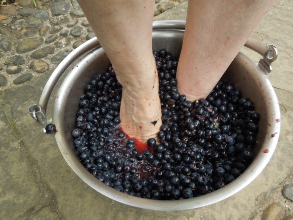 Image of someone treading grapes in a saucepan