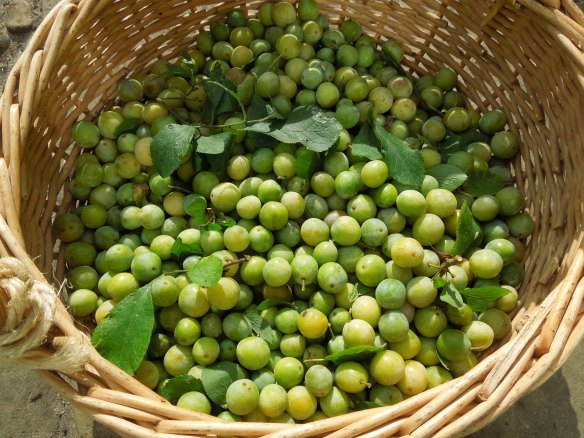Image of wild plums in a basket