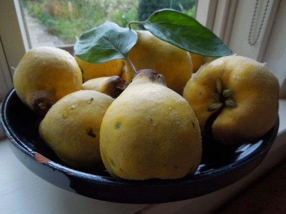 Image of quinces in a bowl