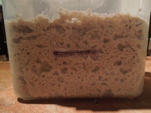 Image of sourdough starter culture