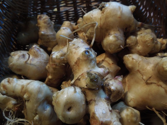 Image of a basketful of Jerusalem artichokes