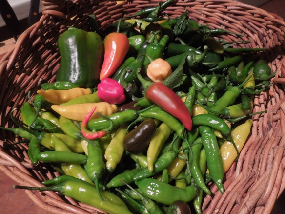 Image of a basket of mixed chillies