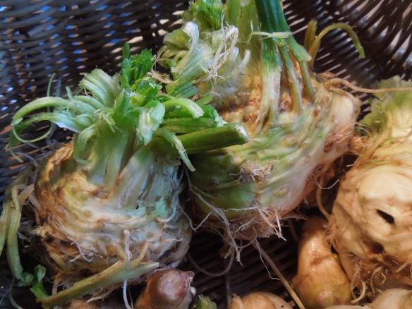 Image of celeriac roots