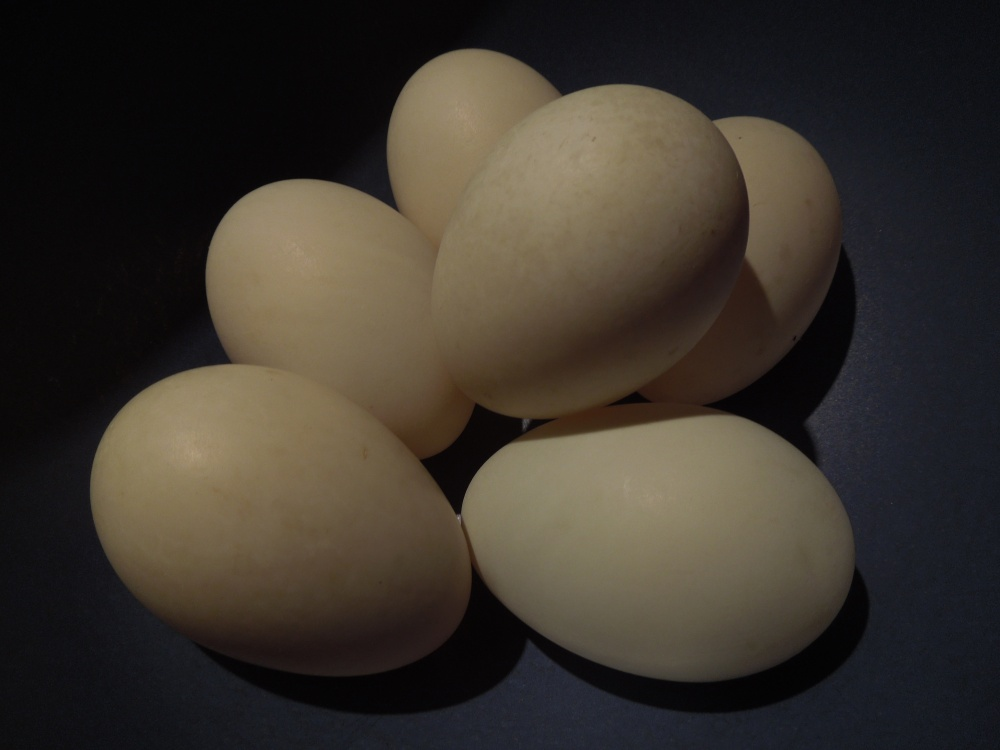 Image of duck eggs