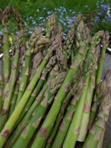 Image of a large picking of asparagus