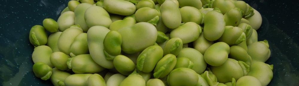 Image of shelled broad beans