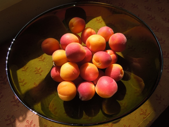Image of a bowl of apricots