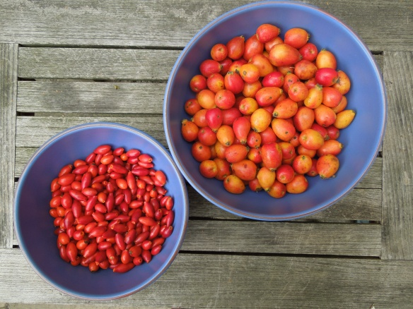 Image of rosehips and crab apples