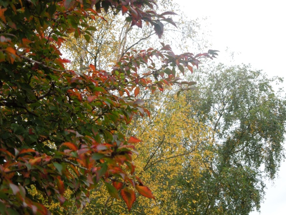 Image of trees in autumn colours