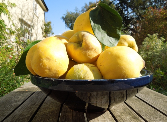 Image of a bowl of quinces