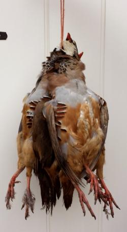 Image of partridges hanging