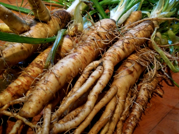 Image of salsify roots