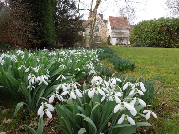 Image of snowdrops in the garden