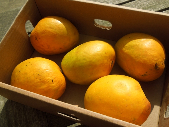 Image of a box of Alphonso mangoes