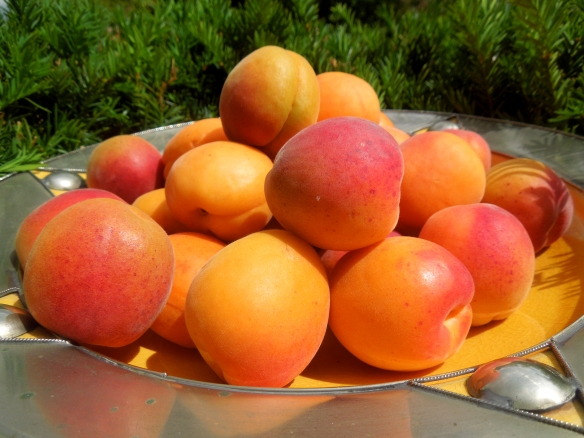Image of bowlful of apricots