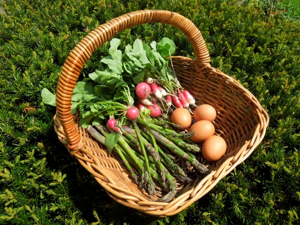 Image of a basketful of asparagus, eggs and radishes