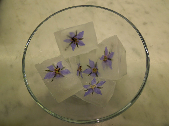 Image of borage flower ice cubes