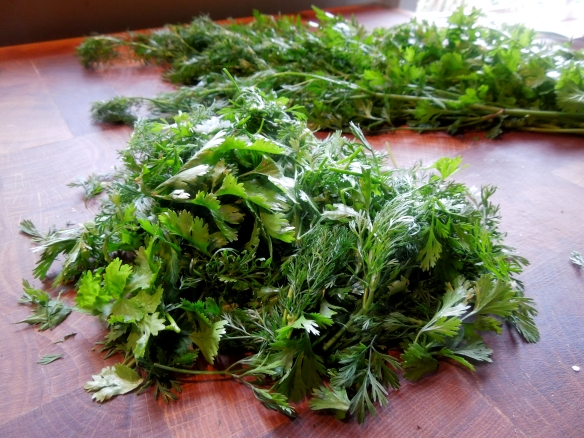 Image of fresh coriander