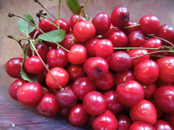Image of morello cherries