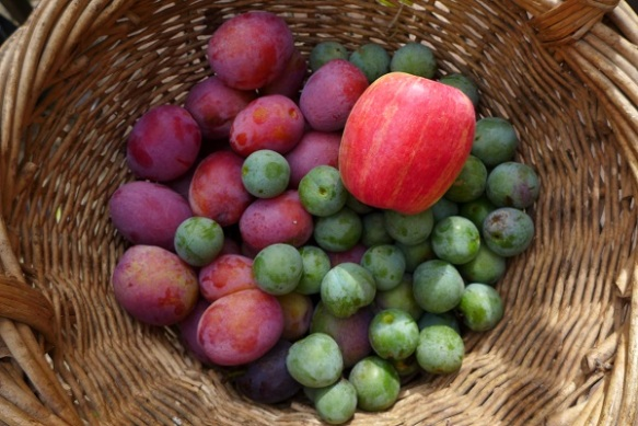 Image of fruit in a basket