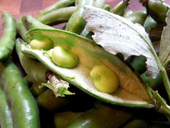 Image of broad beans in the pod