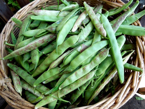 Image of a basket of borlotti beans