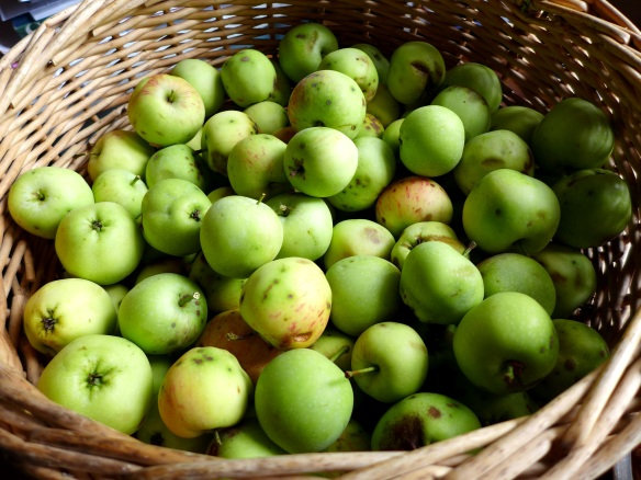 Image of a basket of crab apples