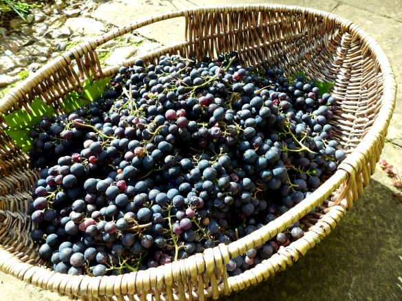 Image of basket full of grapes