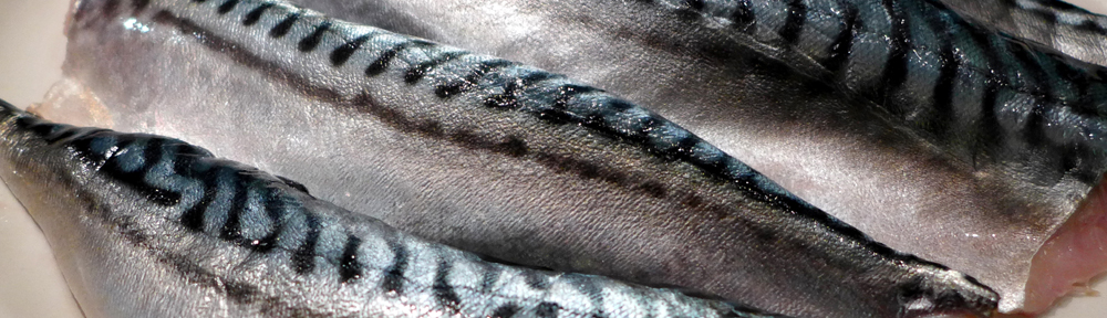 Image of mackerel fillets