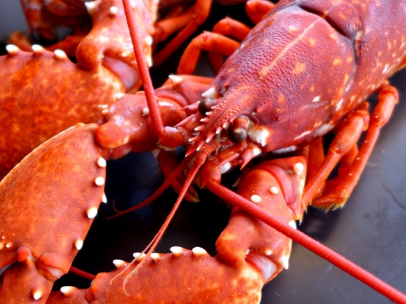 Image of cooked lobster