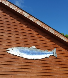 Image of Ummera salmon logo