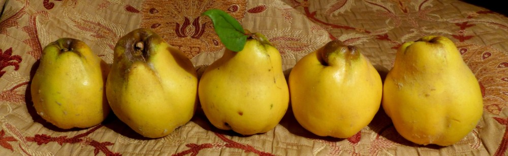 Image of quince